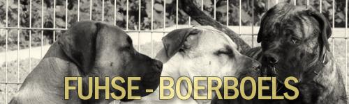 Fuhse Boerboels