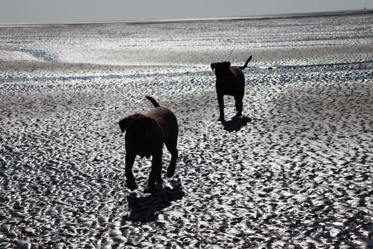Boerboel am Strand